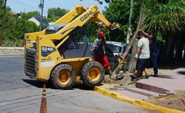 El Municipio ya plantó 5.500 palmeras pindó por todo San Fernando