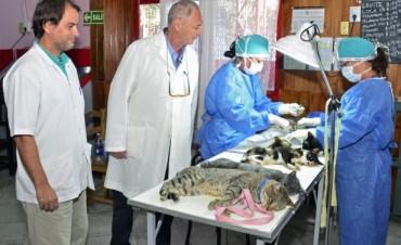 San Fernando continúa con el plan de castración de perros y gatos