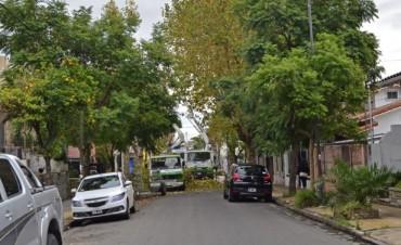 Continúan los trabajos de poda correctiva en el Casco de San Fernando