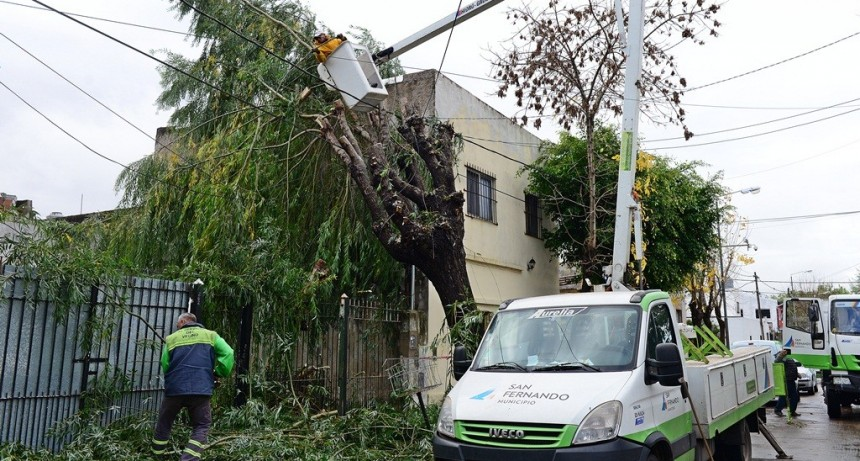 El COEM de San Fernando intervino tras la caída de un árbol sobre un tendido eléctrico