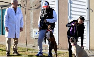 San Fernando encontró un hogar para la pitbull Agustina