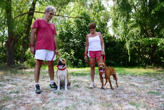San Fernando realiza recomendaciones para la tenencia responsable de animales domésticos
