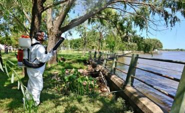 """San Fernando trabaja contra mosquitos y """"mariposas negras"""" y pide precauciones"""