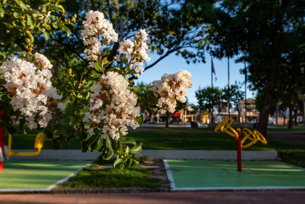 San Fernando plantó más de 35 mil árboles en todo el distrito