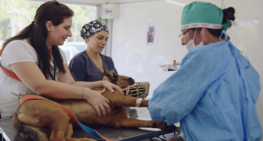 Zoonosis de San Fernando ya lleva castrado y vacunado más de 40 mil animales