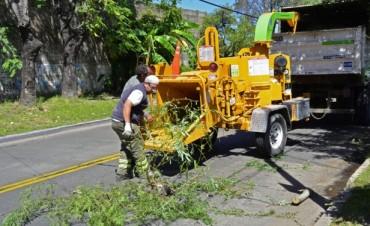 El Municipio realiza trabajos de poda sobre la calle Simón de Iriondo