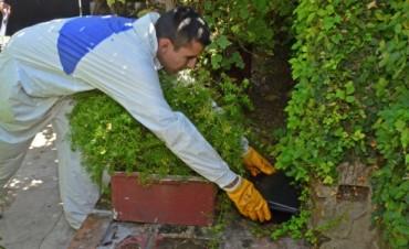 Se lleva a cabo un operativo de control de plagas en todo San Fernando