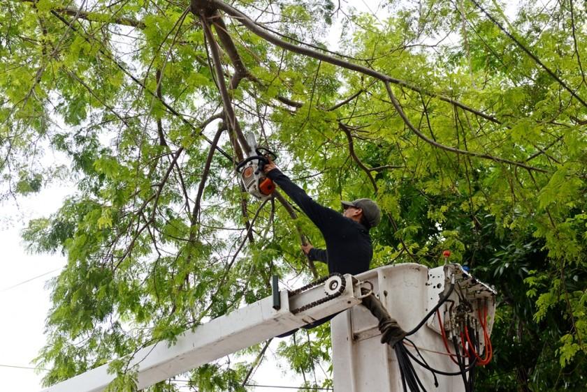 Continúan los trabajos de poda correctiva en Virreyes Oeste