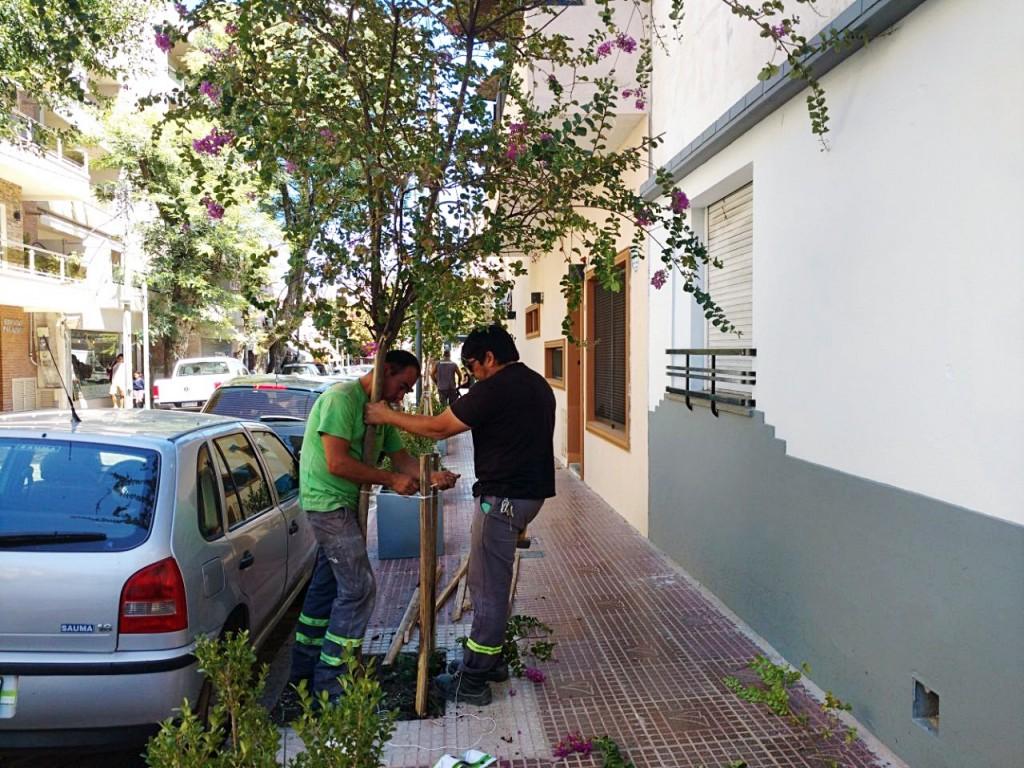 San Fernando instala tutores y realiza poda correctiva