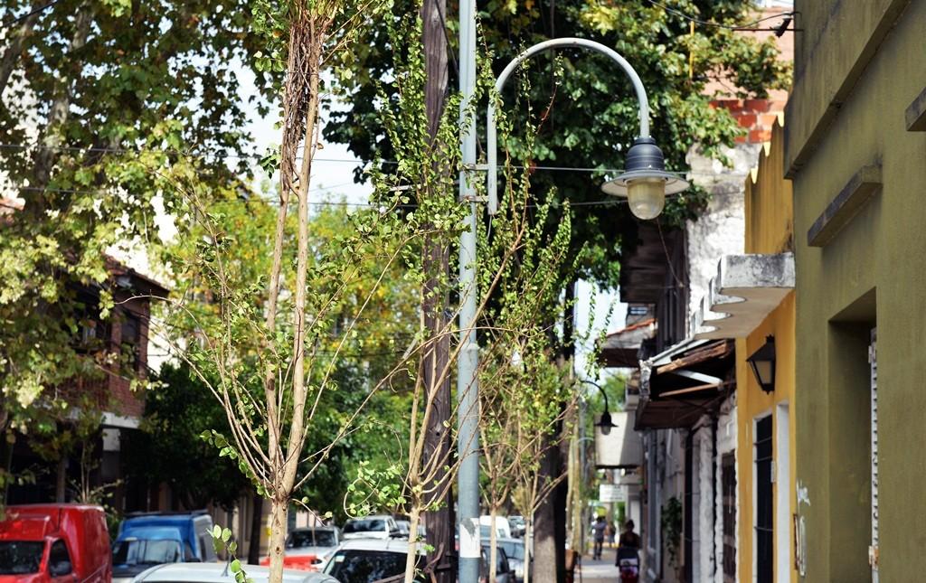 San Fernando profundiza su Plan de Forestación en Victoria