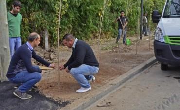 Mejoras en el Barrio Santa Rosa: instalaron luminarias, colocaron 60 árboles y profundizaron en la limpieza