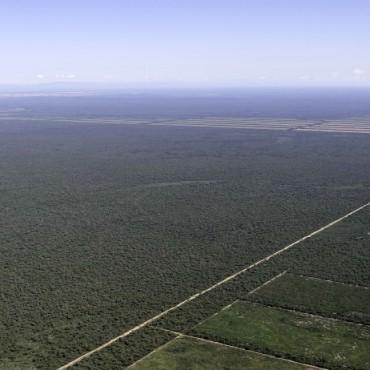 Un informe revela a más de veinte empresarios que violan la Ley de Bosques