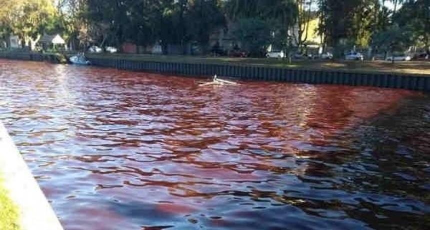 El Río Tigre amaneció rojo y sospechan que una empresa volcó químicos