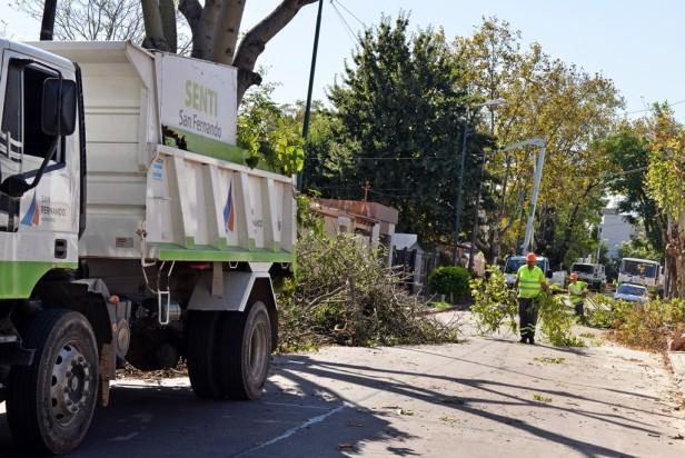 Plan Integral: El Municipio podó más de 1800 árboles