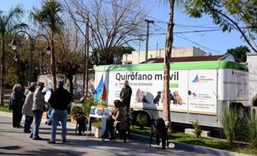 Operativo de Zoonosis en el renovado Boulevard de Carlos Casares