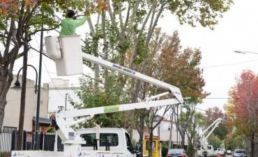 Avanzan los trabajos de poda correctiva en San Fernando