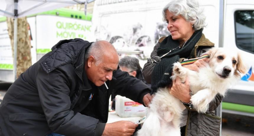 'Zoonosis en tu Barrio' volvió a la Plaza Mitre de San Fernando