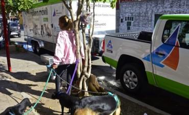 El quirófano móvil de Zoonosis continúa recorriendo los distintos barrios de San Fernando