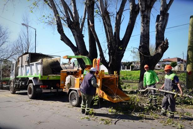 Temporada de Poda: el Municipio ya intervino el 90% de San Fernando