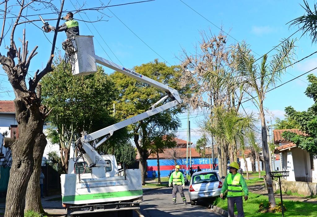 San Fernando hace la poda correctiva de todo su arbolado público