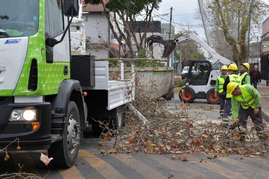 Se profundiza el Plan de Poda 2019 en San Fernando