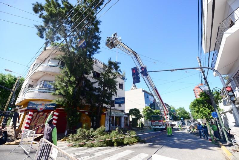 Avanza el mantenimiento forestal con poda preventiva en San Fernando