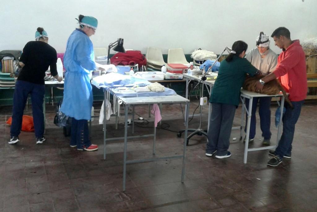 Operativo de castración y vacunación de mascotas en el Delta de San Fernando