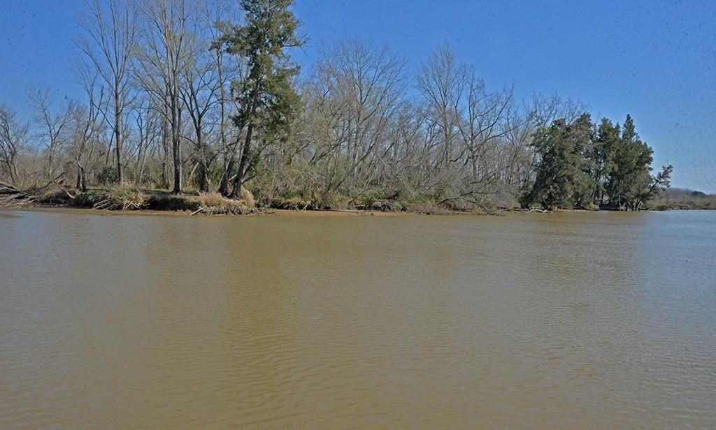 San Fernando advierte presencia de cianobacterias en el Delta y recomienda no utilizar agua para consumo e higiene
