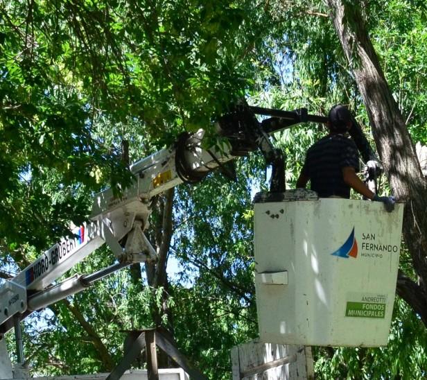 El Municipio de San Fernando realizó tareas de remoción de árboles caídos, ramas y postes, y trabajos de limpieza tras los fuertes vientos